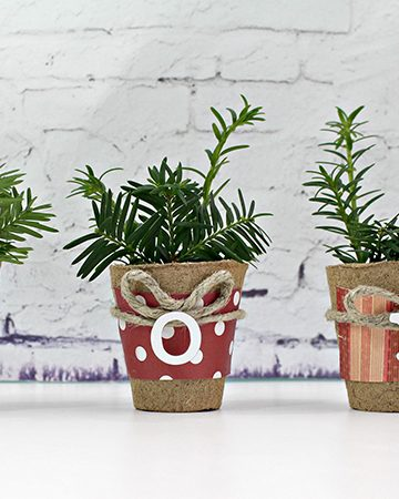Decorative Christmas Evergreen Pots