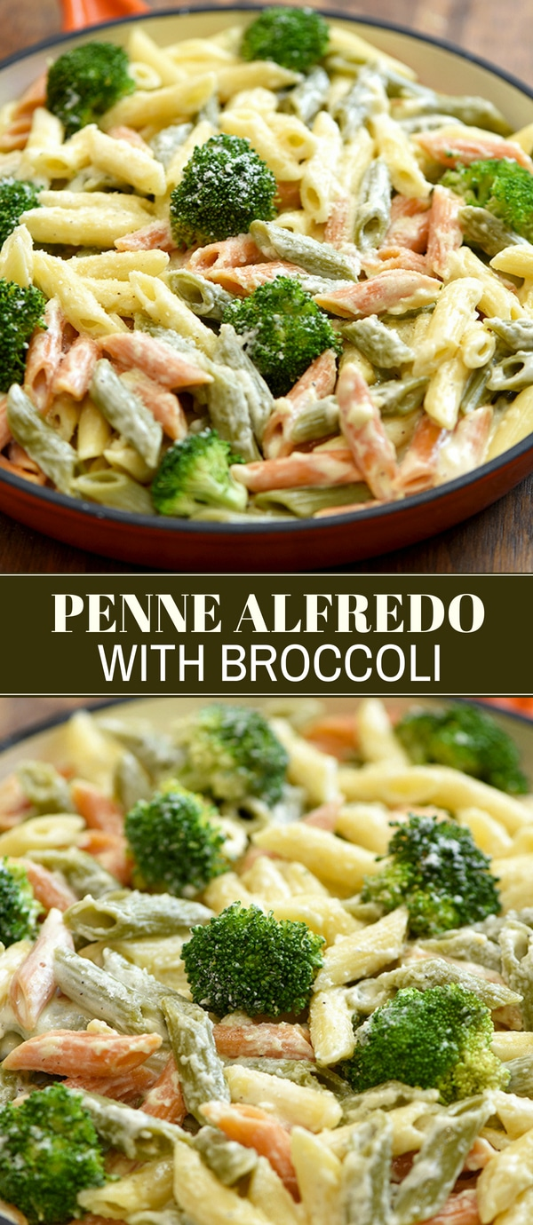 penne pasta alfredo with cream sauce and broccoli florets in a skillet